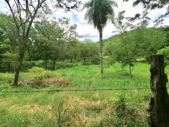 Farm for commercial use of 63 ha /¢222,²7/m² in cañas for sale